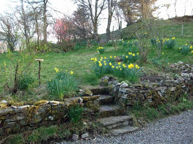 Daffodils at Matheson's